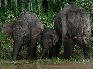 bili-elephant