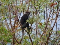 hp-sinharaja-rainforest-eco-lodge-2
