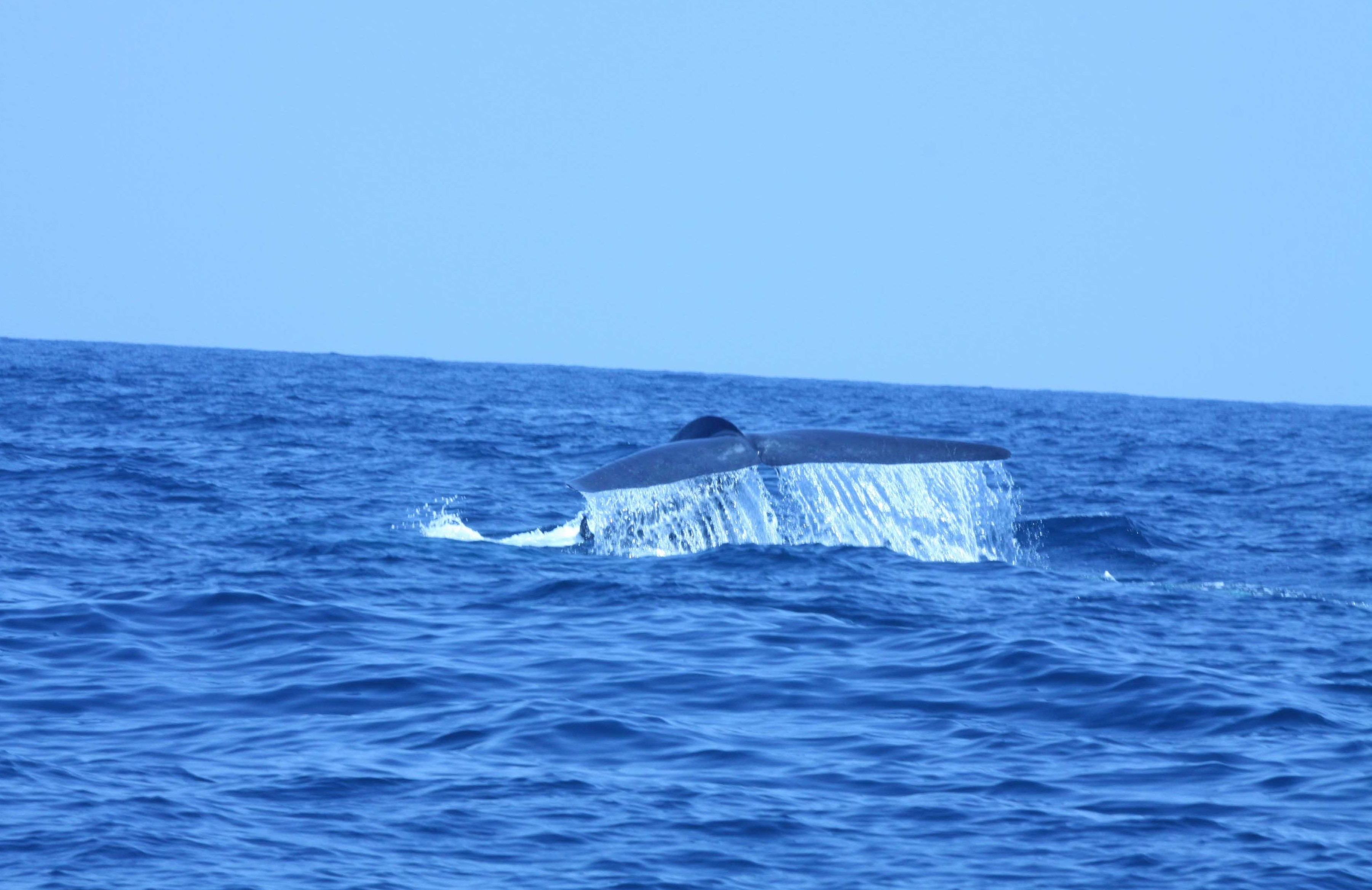 whales-photos-3-from-bwc